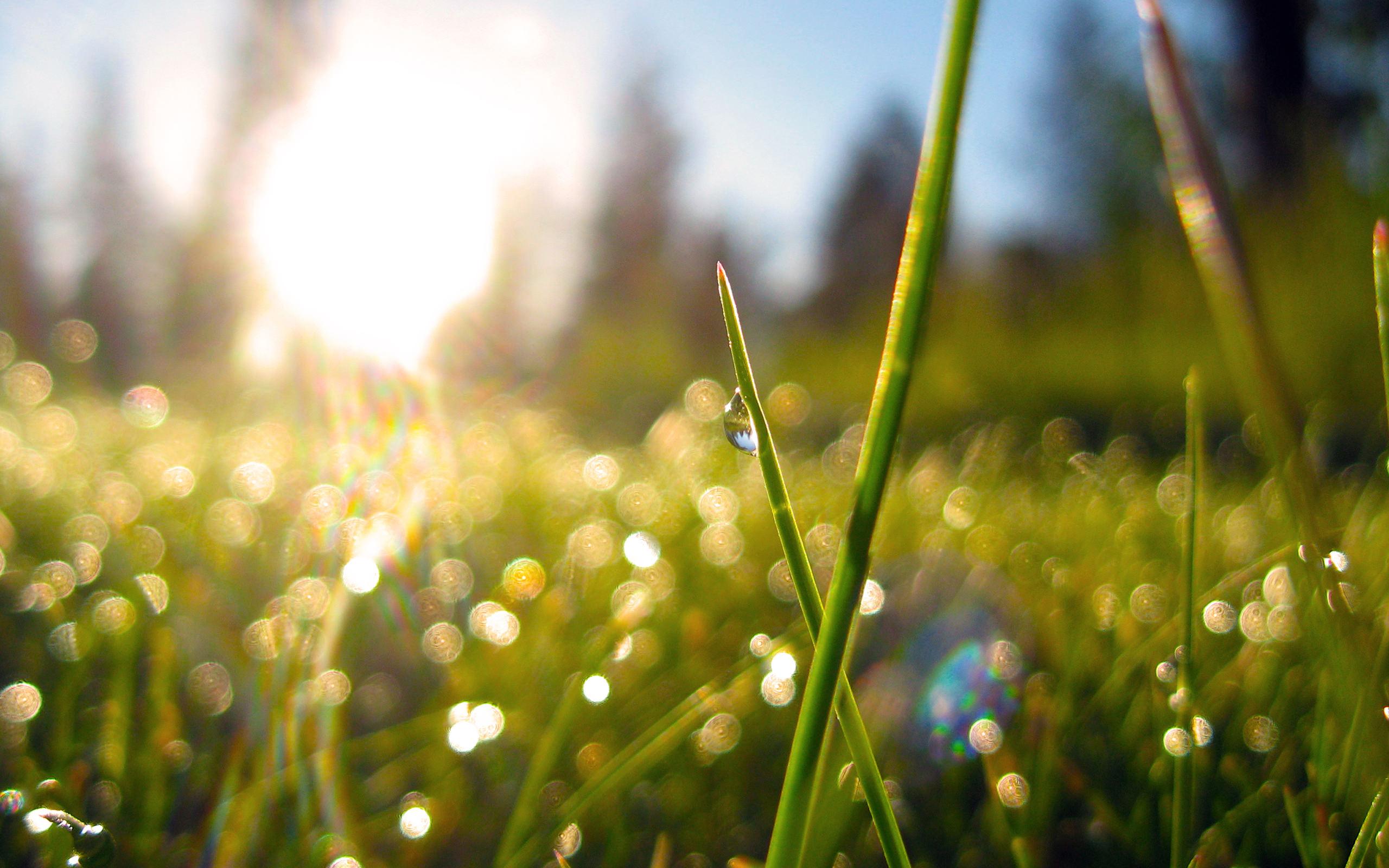 Весеннее утро капельки росы на траве