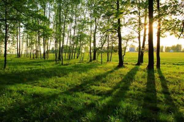 Обои лето утро трава деревья пейзаж на