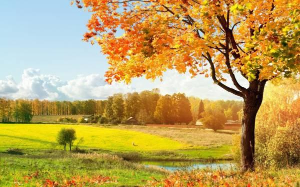 Обои осень пейзаж красивая природа на
