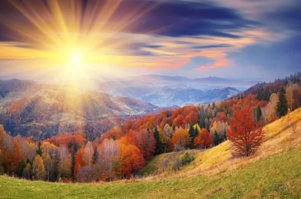 Яркое солнце осень лес деревья