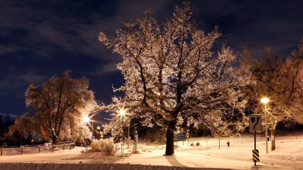 Улица ночь зима фонари деревья в снегу