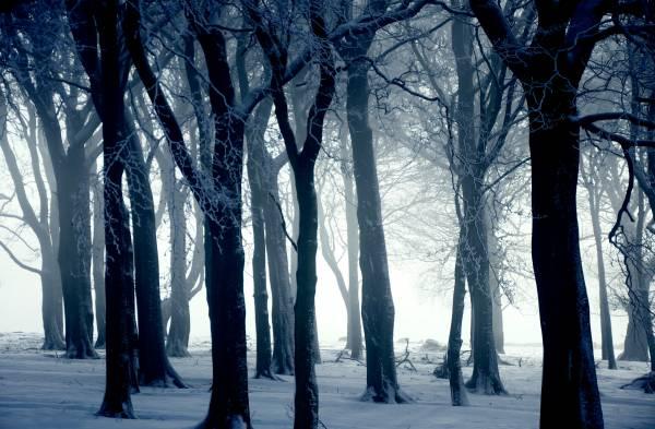 Лес зима снег туман обои для рабочего