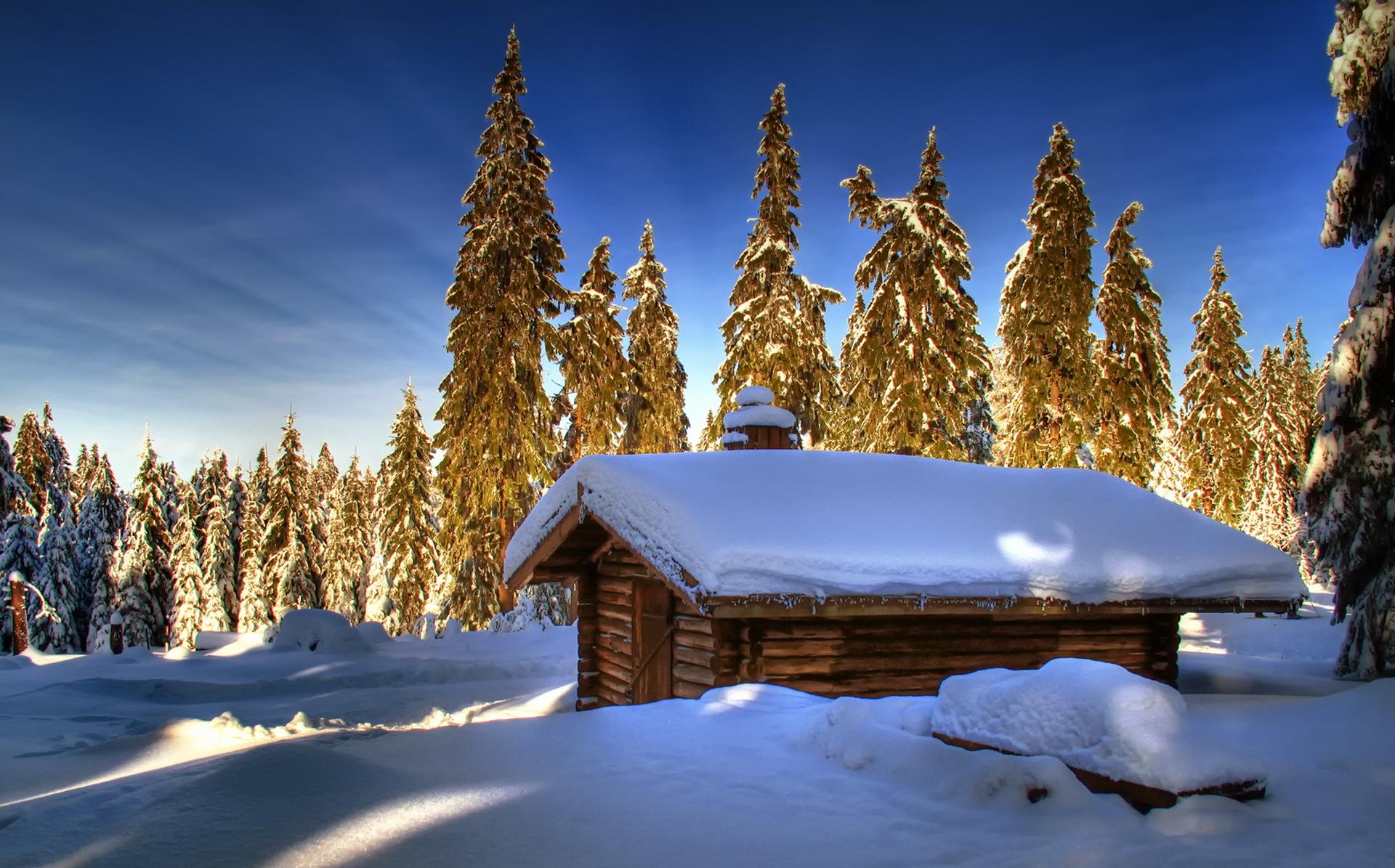 Снегом морозной зимой в лесу